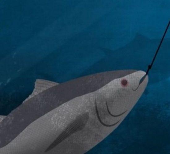 pesca-animation